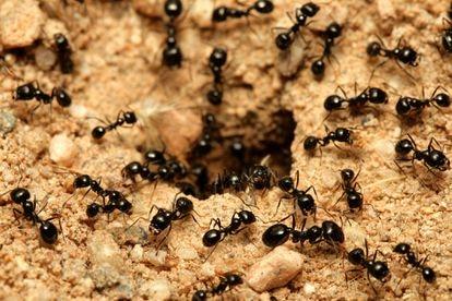 VÍDEO BLOG #Minuto92 Época de hormigas en la UD Almería, por Víctor